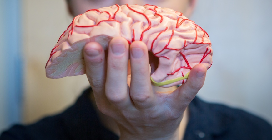 A human hand holding half of a brain.
