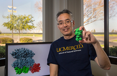 Professor Andy LiWang shows his 3-D-printed model of the proteins that drive cyanobacterial circadian clocks.