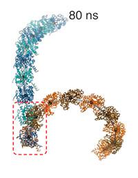 Biosimulation image