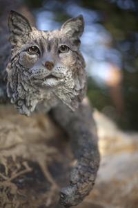 UC Merced bobcat statue